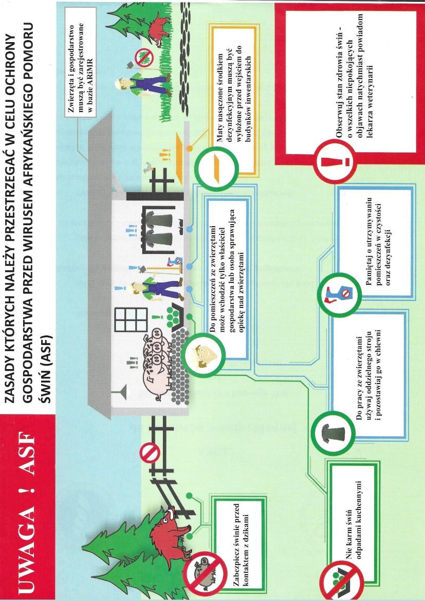 Ilustracja do informacji: Zasady ochrony przed ASF